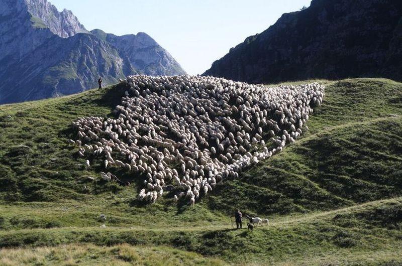 l-ultimo-pastore-il-gregge-di-pecore-di-renato-zucchelli-in-una-scena-del-film-258361